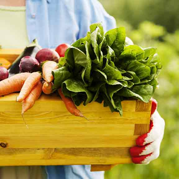 person holds box of vegetables square