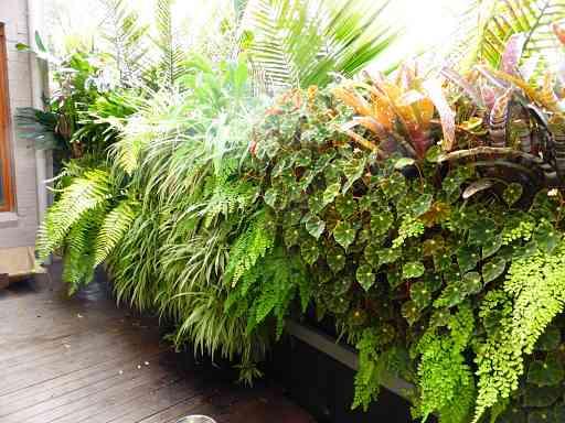Greenwall Company; Living Wall; Green Wall; Vertical Garden