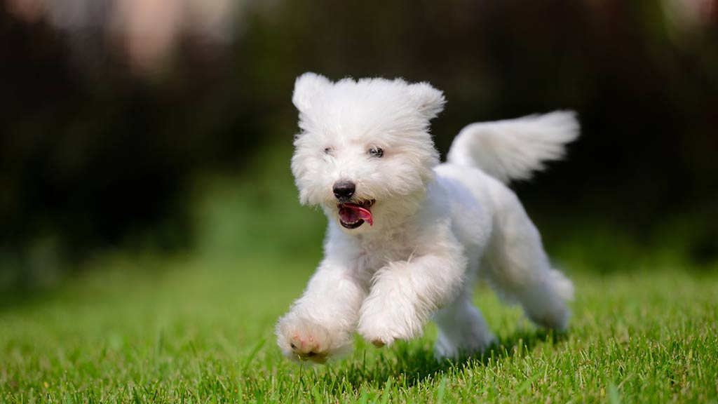 Puppy running on grass