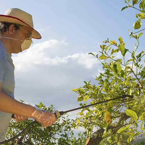 man sprays fruit trees square
