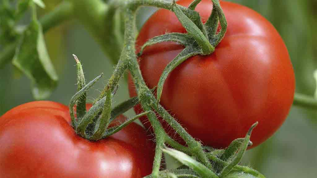Save Money By Growing Your Own Fruit And Vegetables.