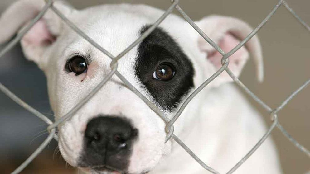 Valley View Dogs Puppy Farm