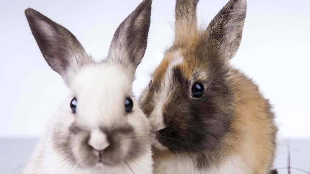 Animal testing labelling - skin care and cosmetics - CHOICE