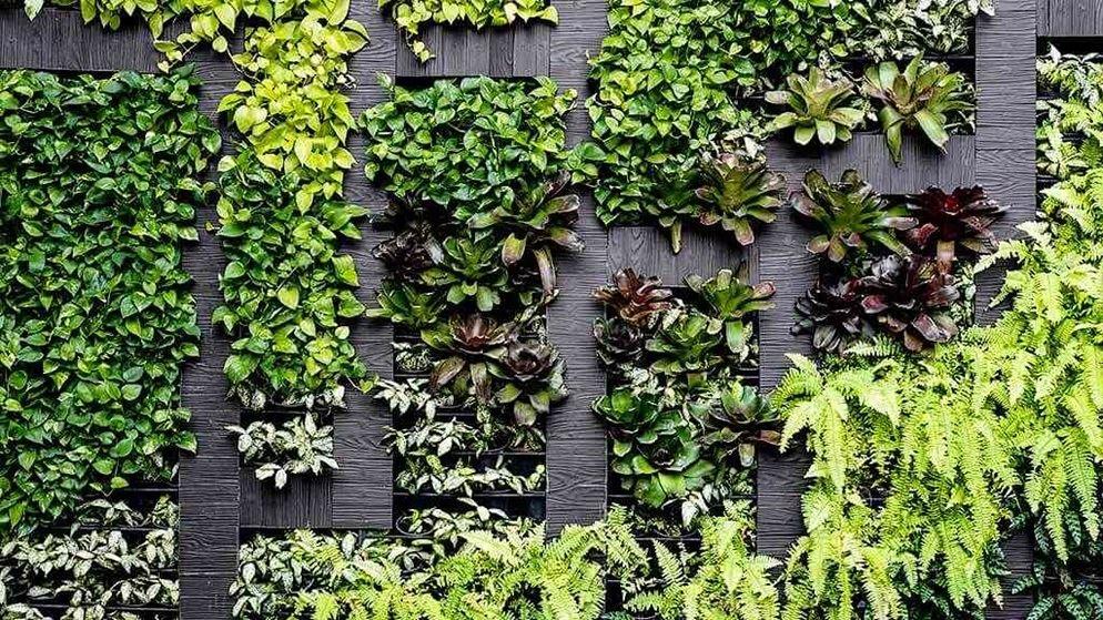 How To Grow A Vertical Garden At Home
