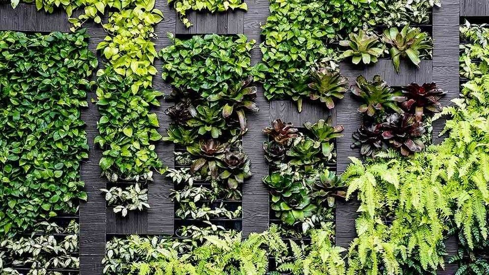 How to grow a vertical garden at home