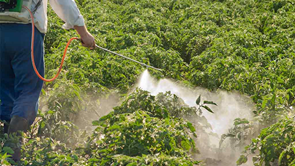 spraying pesticide on crops