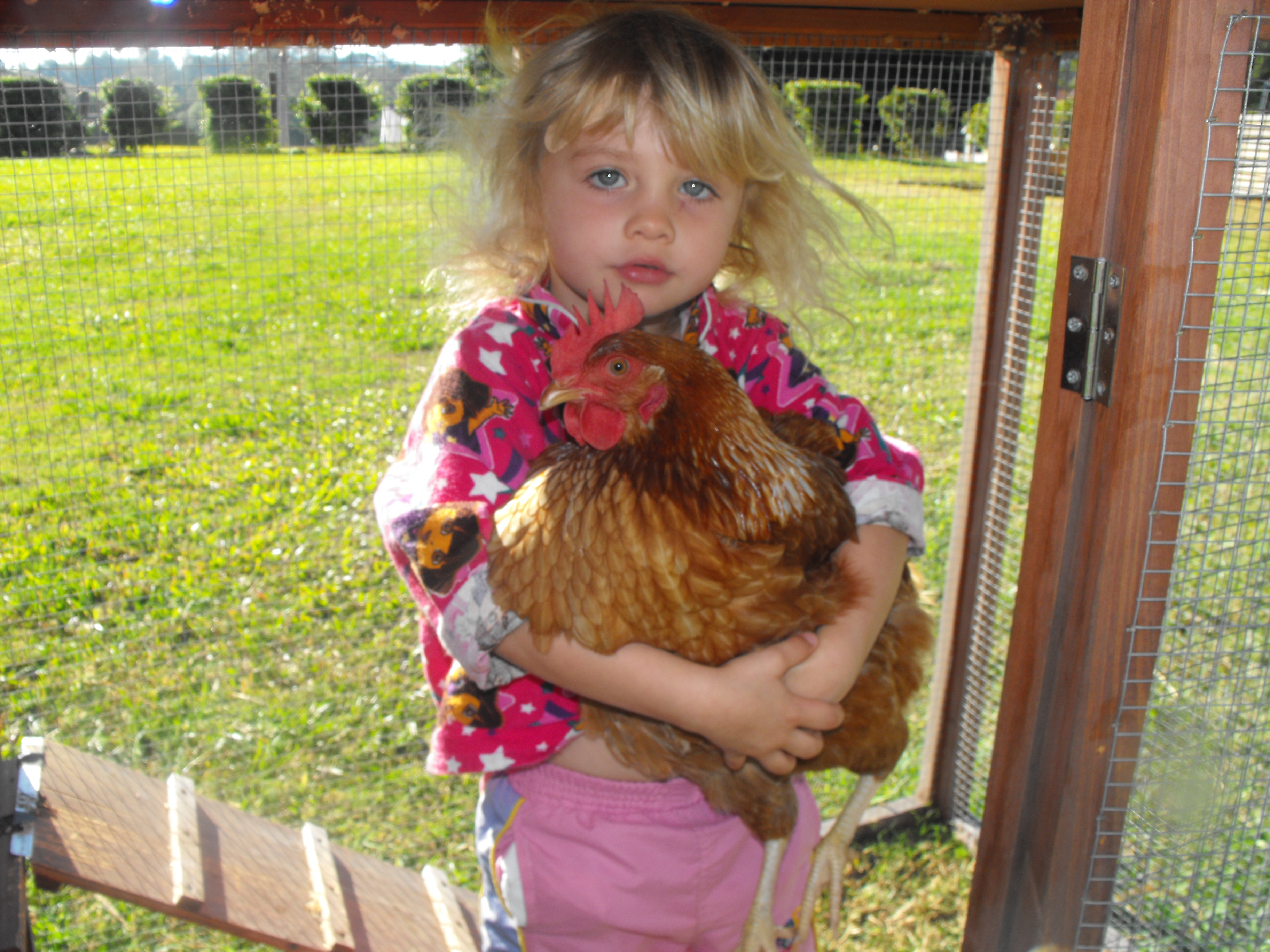 summer with the chicken