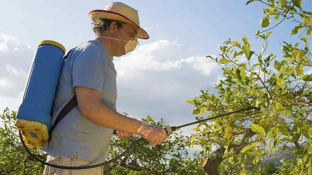 man sprays fruit trees