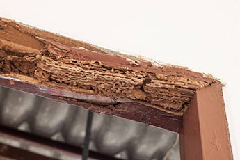 termite_damage_on_door_frame