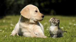 puppy and kitten look at each other