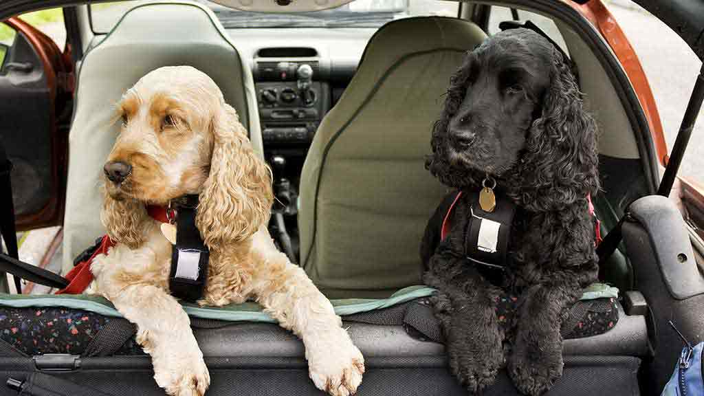 Cb F A F Adc D C on Dog Car Safety Harness
